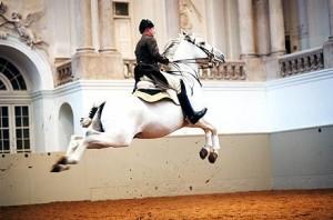 The Spanish Riding School