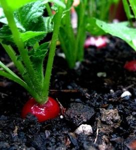 Ce putem cultiva in ultima luna de vara ?