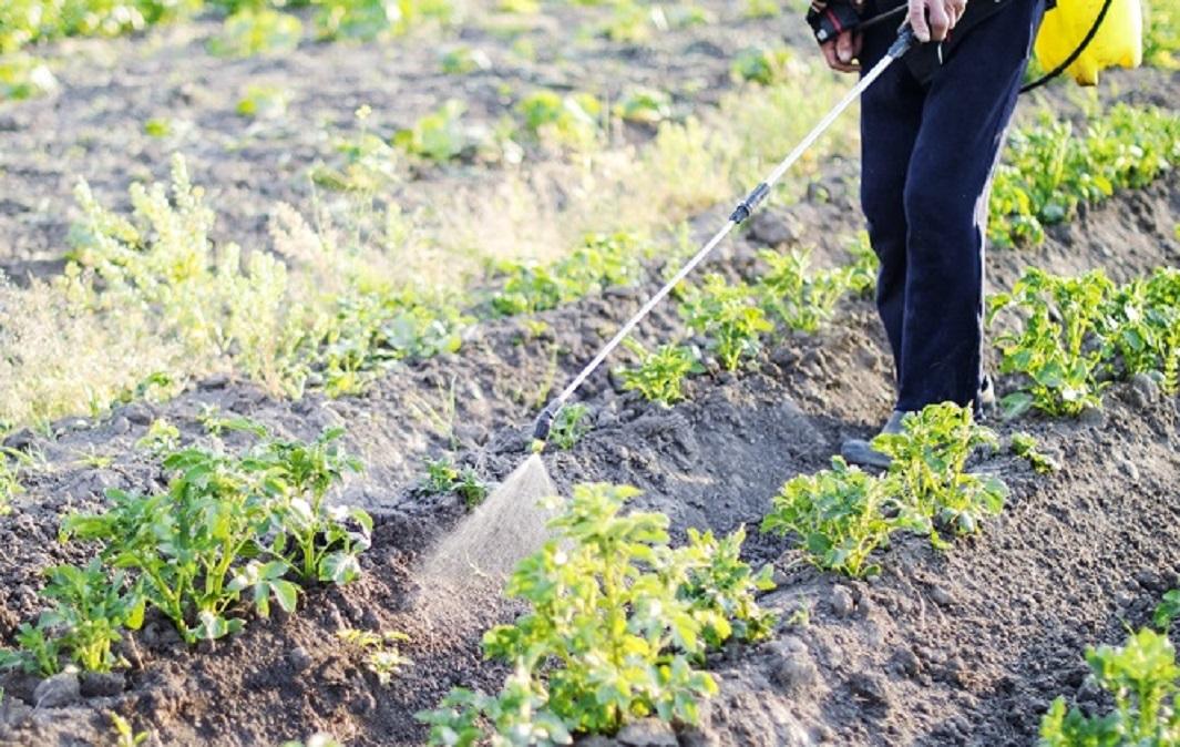 Despre pesticide si insecticide